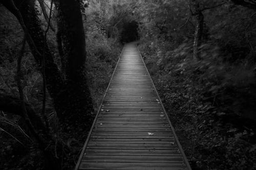 black-and-white-end-forest-road-way-Favim_com-457905_large