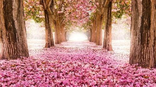 flowers-pink-Favim.com-973712